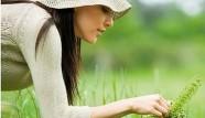 Aspirine végétale: A l'abri de la douleur