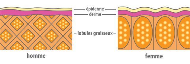 cellulite schema
